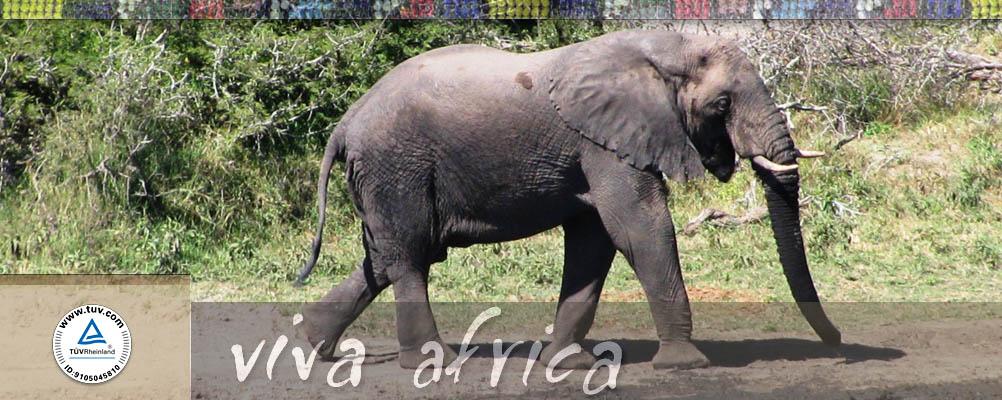Viva-africa-zehetleitner.com